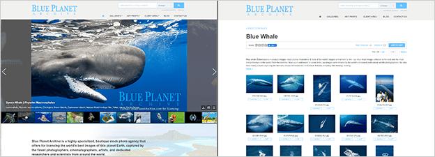PhotoShelter template customization matching WordPress (Blue Planet Archive)