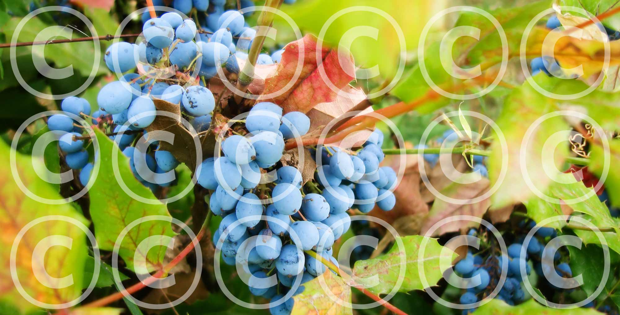 Watermarking your images: Pros & Cons - Featured Image