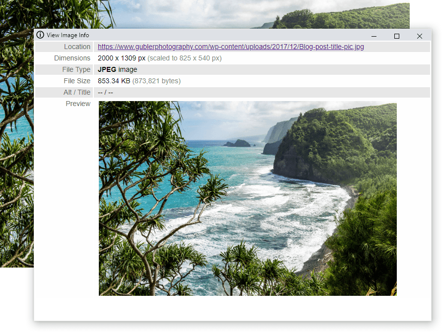View image info chrome extension preview
